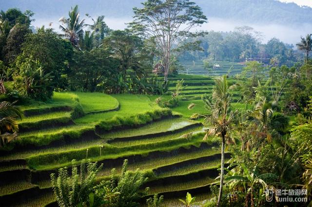 巴厘岛著名的梯田风光主要集中在德格拉朗一带