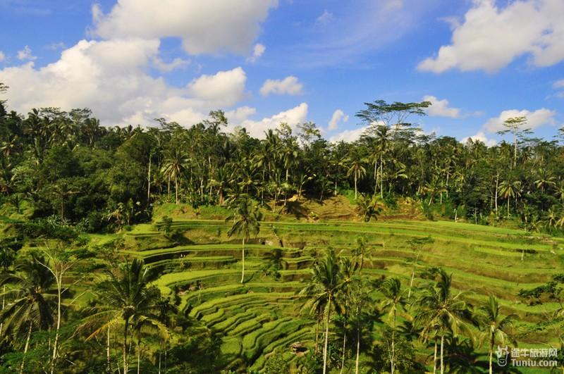 德哥拉朗梯田_巴厘岛图片_巴厘岛岛相册_途牛
