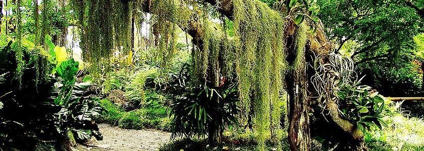 """省第一个充分展示和表现海南热带雨林""""绿色生态文化""""的综合性主题景区"""
