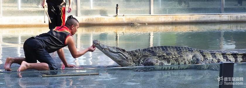 广州鳄鱼公园图片