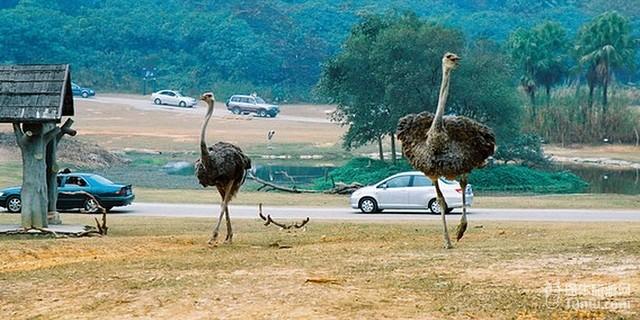 长隆野生动物园自驾游线路推荐