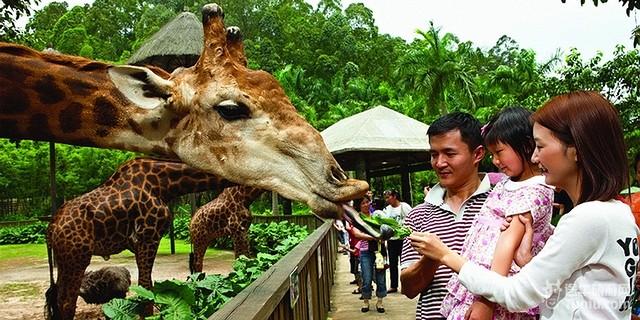 香江野生动物世界长隆野生动物园