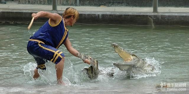 广州鳄鱼公园旅游线路推荐