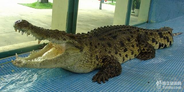 广州鳄鱼公园地址_鳄鱼公园_鳄鱼公园打鱼机_广州鳄鱼公园_淘宝