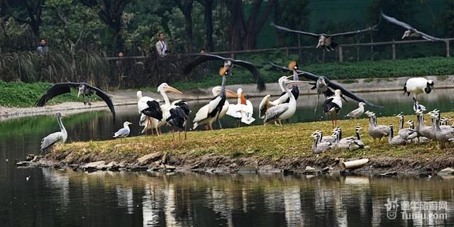 长隆动物园推荐路线