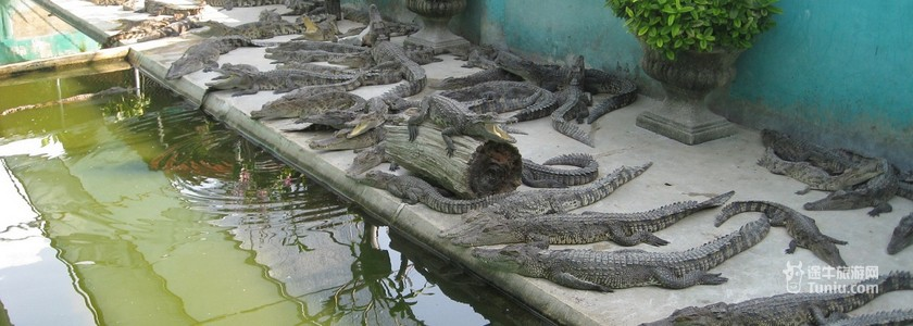 【图片】北榄鳄鱼湖动物园