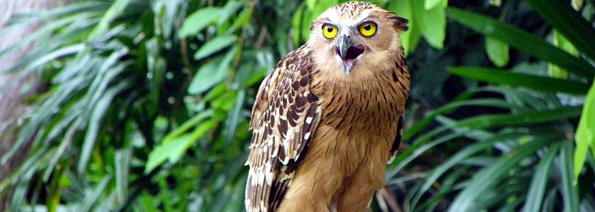 裕廊飞禽公园_新加坡旅游景点