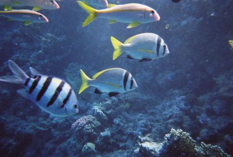 壁纸 动物 海底 海底世界 海洋馆 水族馆 鱼 鱼类 480_324