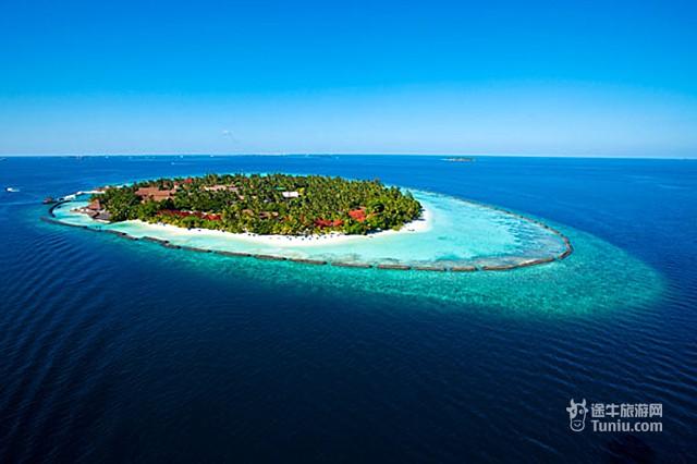 椰子大海矢量图